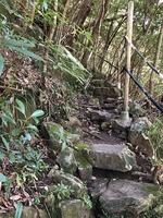 屋久島16 (2).jpg